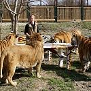 Foto: www.tigre.sk