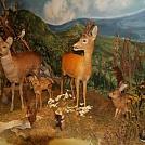 Foto: Tribečské múzeum